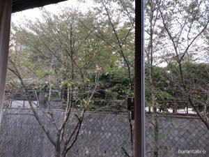 窓からみた木々